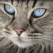 cat-1508613__340