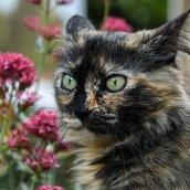 cat-2491151__340