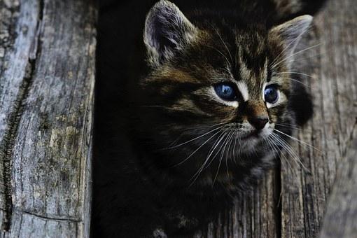 cat-914110__340